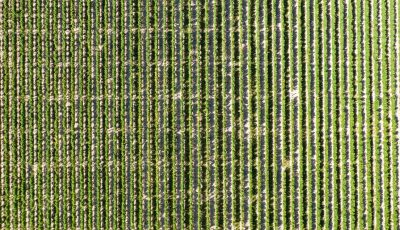 prestation agricole avec drone